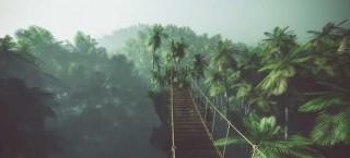 Wie im Dschungel!