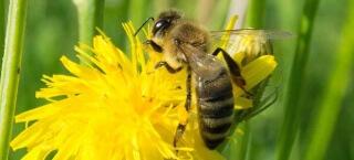 Punkte sammeln wie eine fleißige Biene